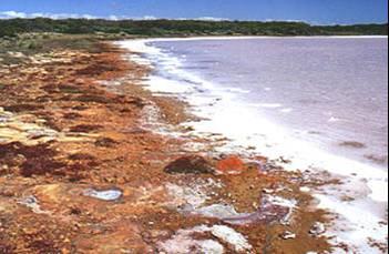 RiverMurrayCoorong1.jpg